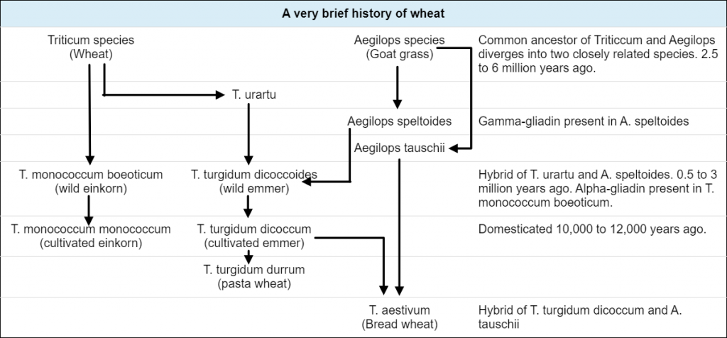 History of Wheat