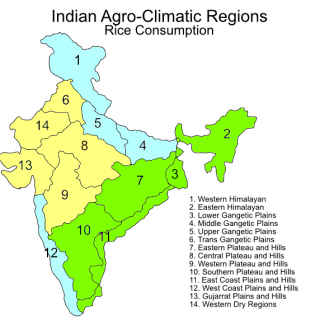 Indian agroclimatic zones – rice consumption