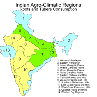Indian agroclimatic zones – roots and tubers consumption